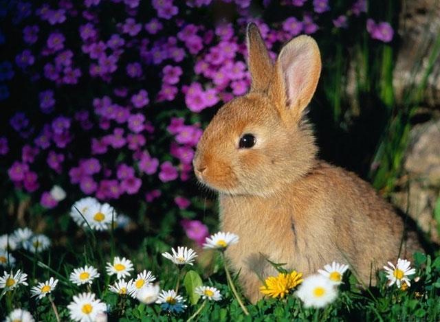 conejo-primavera