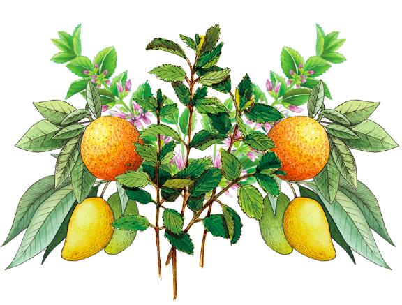 Aires de Campo: alimentos orgánicos en tu mesa 1